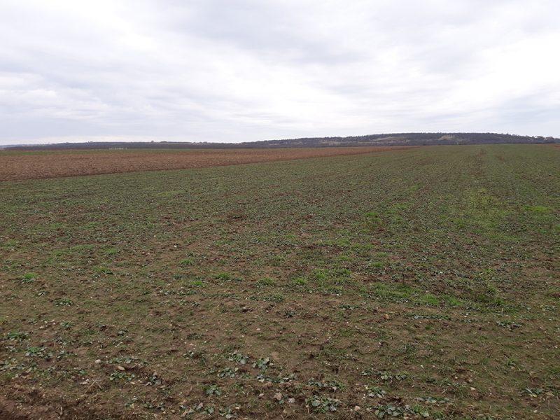 Teren extravilan de vanzare, zona metropolitana Oradea-Biharia - T04