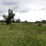 Teren extravilan de vanare Oradea - Paleu T06