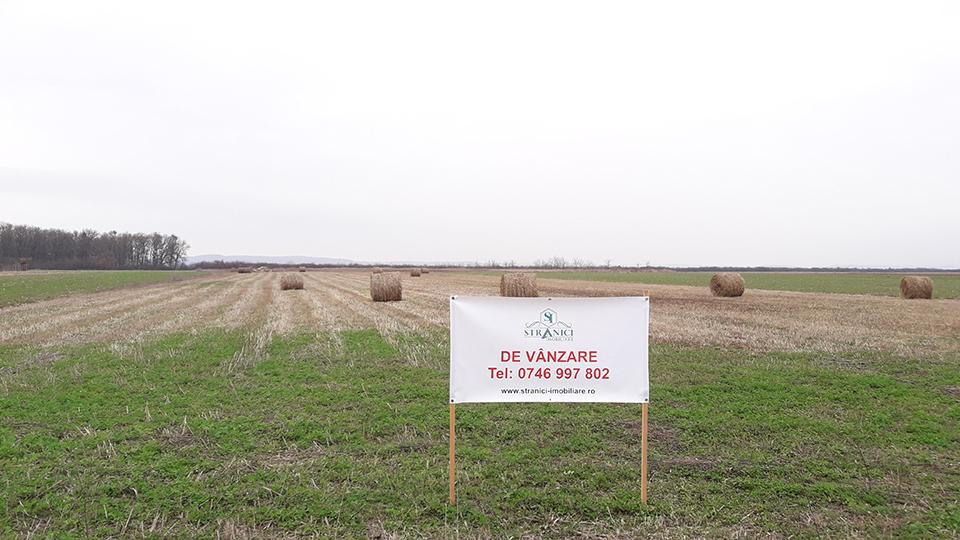 teren-parcele-intravilan-de-vanzare-Alparea-jud.-Bihor-T21